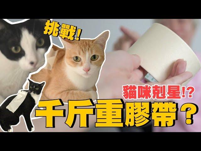 【丫妃和兩個太監】把1000公斤的膠帶黏在貓的身上!? 連走路都走不了!?
