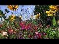 Luçon : les plantations superbes du jardin Dumaine 🌼