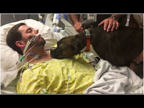 Dog Says The Final Goodbye to his  Dying Owner In Hospital