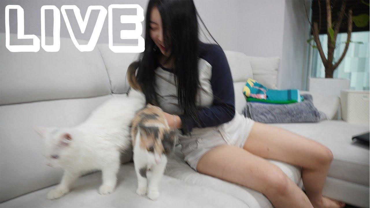 고양이한테 상담받는 라이브 방송 [풀버전]