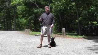 Connor - Scottish Terrier - Dog Training Winston Salem Nc