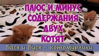 Плюс и минус содержания двух котят. Смешные котята
