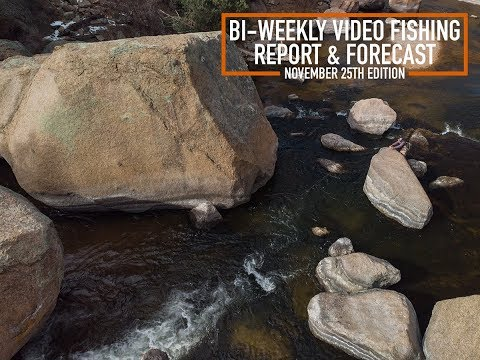 Bi Weekly Video Fishing Report & Forecast - November 25th Edition