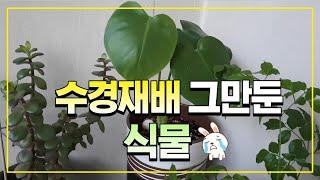 수경재배 그만둔 식물