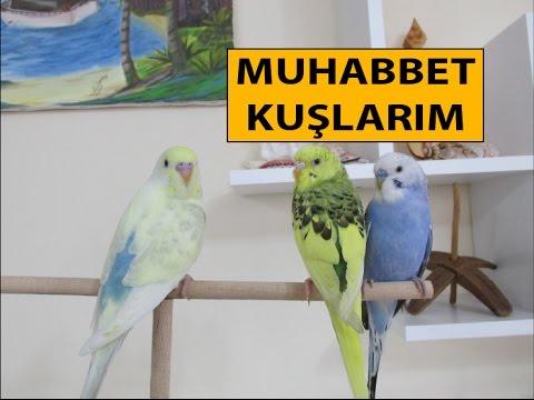 Muhabbet Kuşlarım