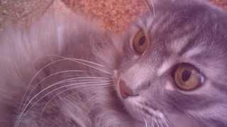 Всемирный день кошек - 1 марта