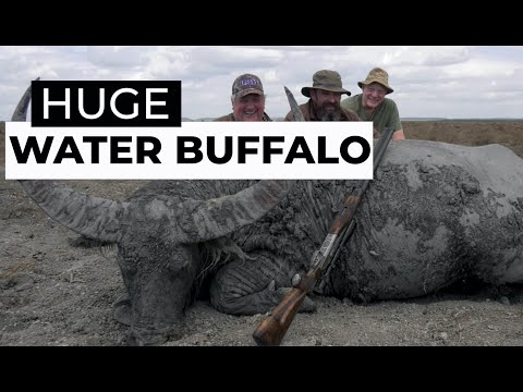 SCi Water Buffalo 'Film'
