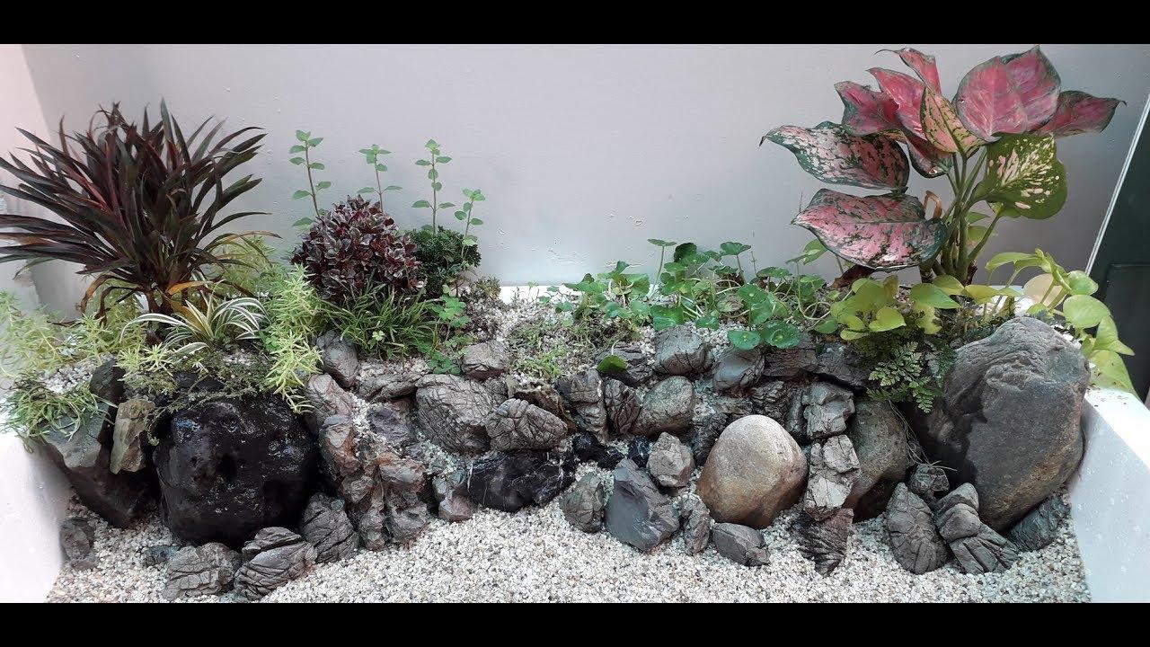 Hồ Bờ Sông #1: Thủy Sinh Thùng Xốp Bán Cạn Cho Cá Bảy Màu (Styrofoam Guppy Fish Tank)