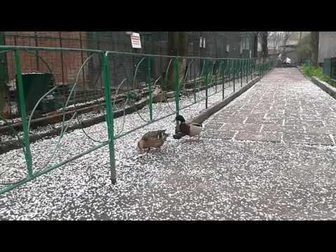 Ducks in Odessa Zoo
