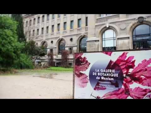 Museum National d'Histoire Naturelle - Dispositifs mulitmédia