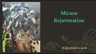 Micans Rejuvenation
