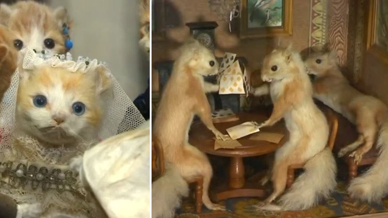 Morbid Anatomy Museum hosts taxidermy exhibition in NYC - YouTube