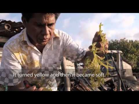 Documentary Film On 2009 MONTARA Timor Sea OIL SPILL DISATER