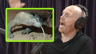 Komodo Dragons Freak Bill Burr Out!