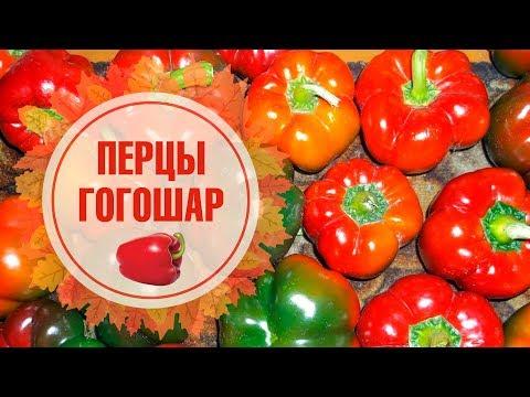 Как вырастить Перцы ГОГОШАР & РАТУНДА? 🌱Перец F1 Особенности выращивания 🌱 | особенности | выращивания | вырастить | рубинов | ратунда | гогошар | хитсад | пеппер | огород | томат