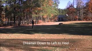 "5yo Aggressive German Shepherd ""dreamer"" Before And After Video - Dog Training Raleigh Durham"