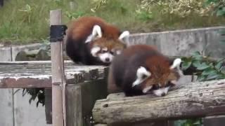 MDK Video l красивые животные,взорвут интернет