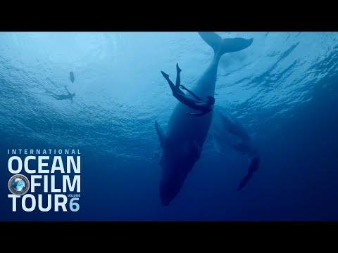 video:International OCEAN FILM TOUR Volume 6 | Official Trailer