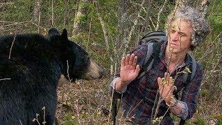 Bear Gives a Warning Bite | BBC Earth