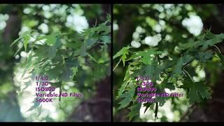 Rain Light (Shot on Fujifilm X-H1) -