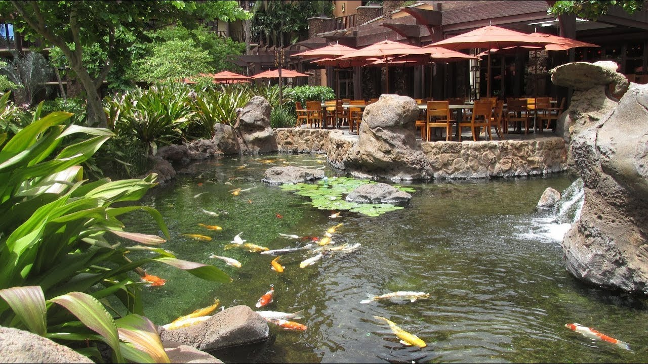 koi pond at disney u0027s aulani resort ko olina hawaii youtube