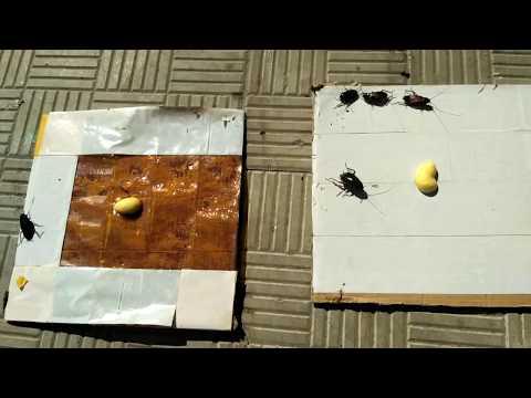 как своими руками можно сделать эффективную ловушку для тараканов