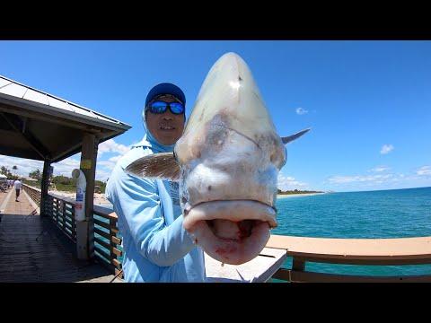 Light Tackle Fishing For JUNO GIANTS! (EPIC PIER FISHING)