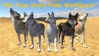 The True Story From Wolf Quest  part 1