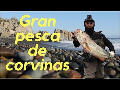 Pesca en Antofagasta-31,