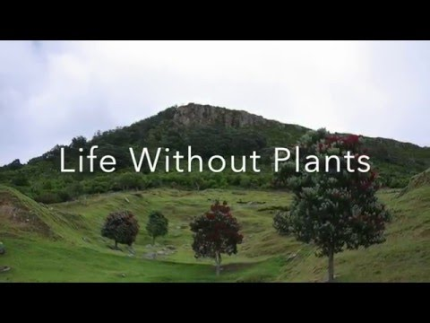 Life Without Plants
