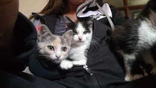 СИЛЬНЕЙШИЕ ПРИКОЛЫ Коты присутствуют Приколы с котиками - Чёткие приколы 2019 МатроскинТВ