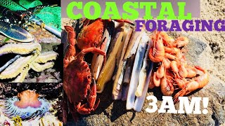 3AM COASTAL FORAGING - Gathering Clams, Cooking On The Beach ! GIANT STARFISH !