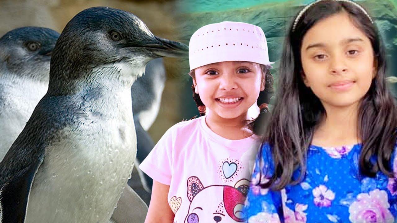 Children Fun Video    Sydney Zoo   Meet the Amazing Penguins!