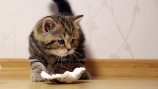 How to catch tail of mom-cat .  Funny Cats and Cute Kitten