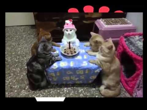 cats-celebrates-birthday---very-funny