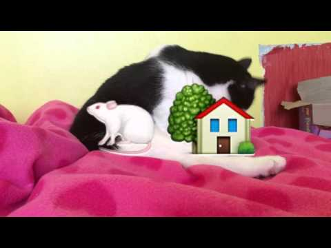 """""""I'm an Albatraoz (Workout Mix)"""" Fan Video with pebbles the cat"""