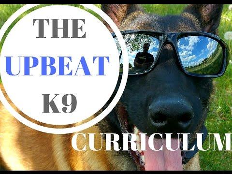 Upbeat Canine Dog Training