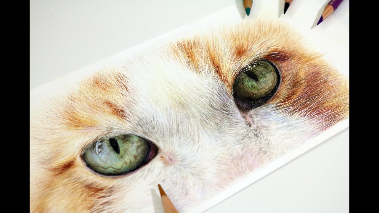 How to Draw Cat Eyes with Coloured Pencil | Realistic ...