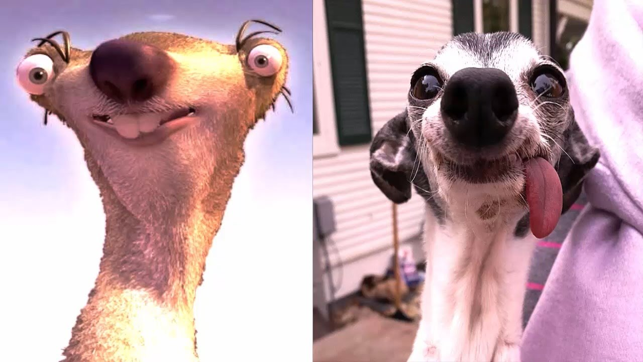 Sid The Sloth Tongue Out