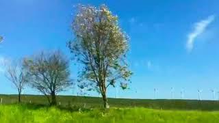 Turkmen sazy toylaryn bezegi bolan giris sazy