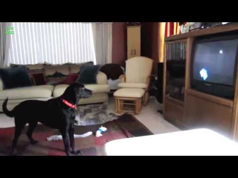 YT Ultimate Funny Dog Video Compilation 2013 [NEW HD]