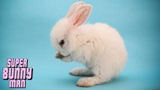可愛くないウサギが鬼畜【Super Bunny Man】#2