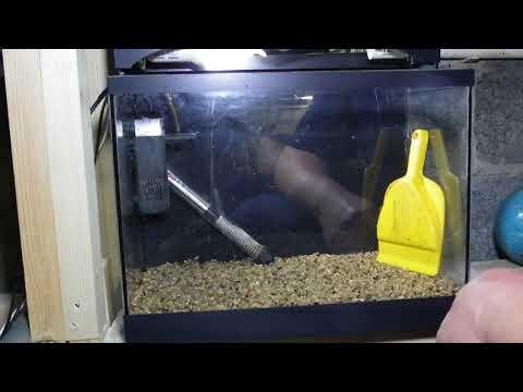 Жизнь аквариума. Запуск аквариума. . Аквариум №1. Серия №1