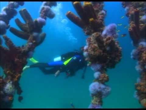 Extrañas criaturas bajo las aguas de Aruba - YouTube