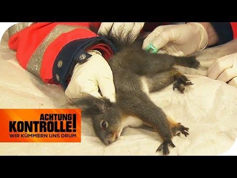 Fieber messen beim Eichhörnchen: Wird es überleben? | Achtung Kontrolle | kabel eins