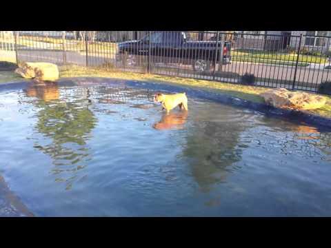 Dog park follies