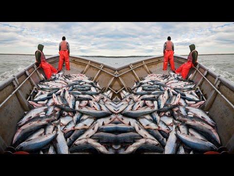 Unbelievable - BIG River   BIG Net   BIG Fish