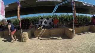 Pumpkin patch @ Tanaka farms (Irvine) HD