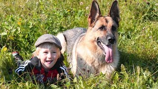 German Shepherd Dogs Protecting Kids and Owners Compilation