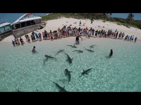 The Famous Shark Show Of The Bahamas